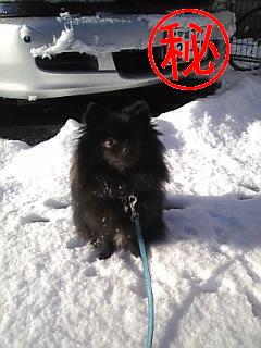 雪散歩2.jpg
