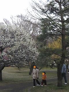 小金井公園の梅4~00.jpg
