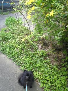 春散歩.jpg
