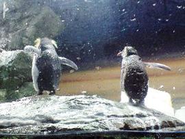 090211ペンギン