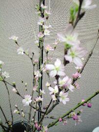 090226桃の花