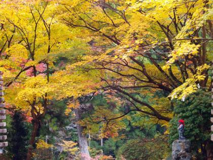 大洞院 紅葉1