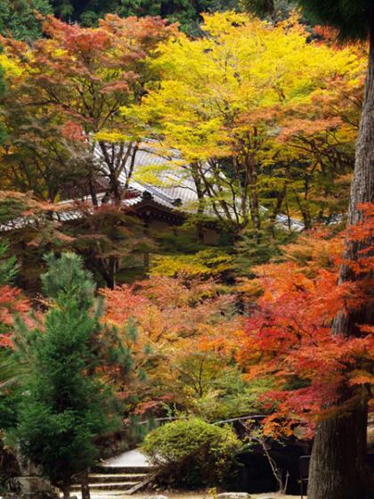 大洞院 紅葉2