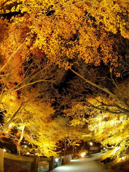修善寺虹の郷 紅葉ライトアップ3