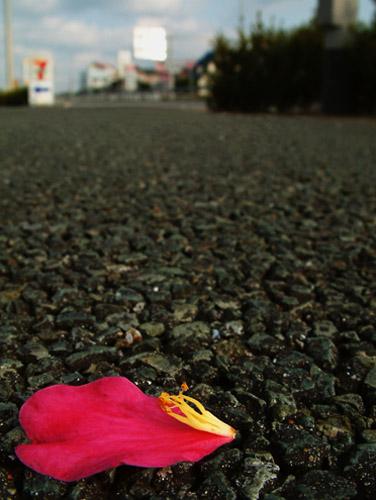路上の花びら