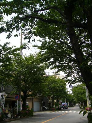 東京都 足立区 介護老人保健施設(入所・短期入所・通所リハビリ) 千寿の郷 柳原 新緑のトンネル