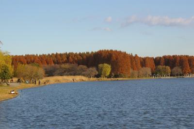 autumn560.jpg