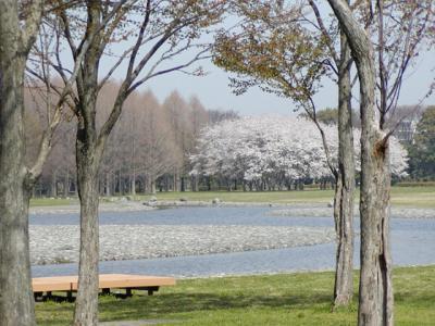 spring560.jpg