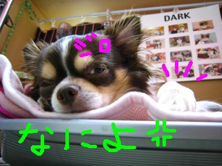 IMG_0175.jpg