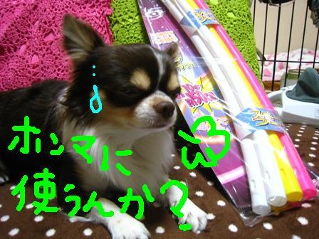 IMG_9029.jpg