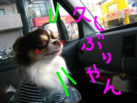 IMG_9310.jpg