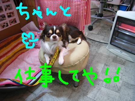 IMG_9431.jpg