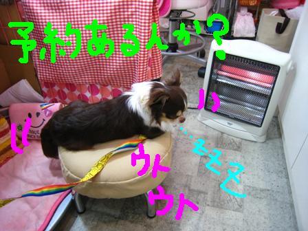IMG_9434.jpg