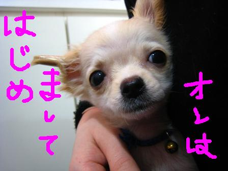 IMG_9452.jpg