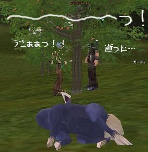 20060409-6.jpg