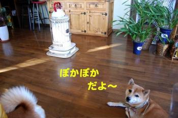 5_20091117221017.jpg