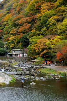 20081109013GO大山蒜山湯原温泉