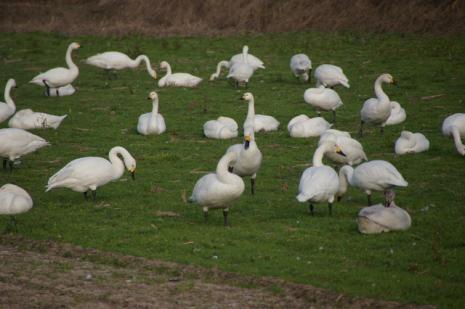 白鳥ロード2