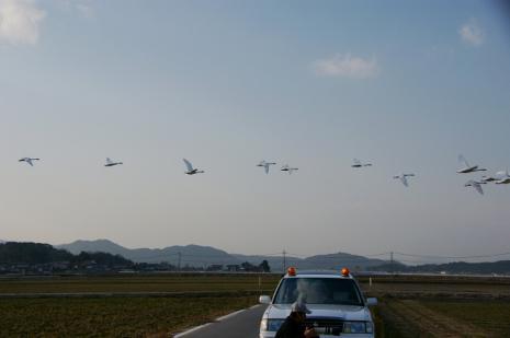 白鳥ロード1