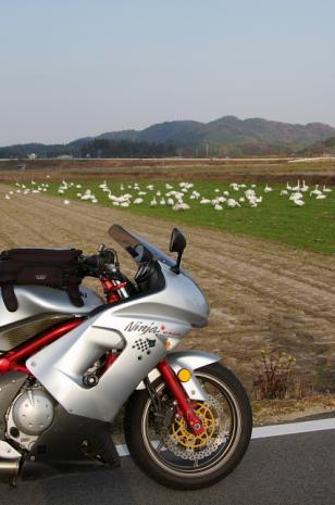 白鳥ロード3