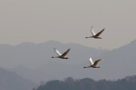 白鳥ロード4