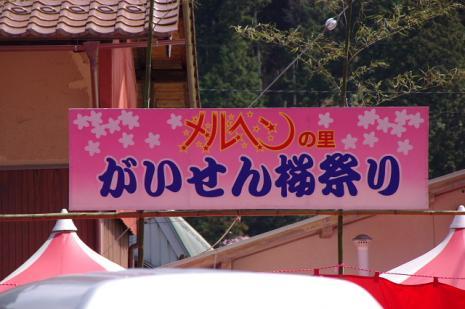 がいせん桜1