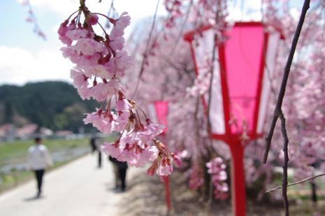 がいせん桜5