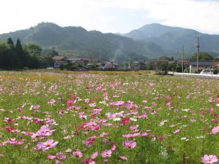 kosumosu08
