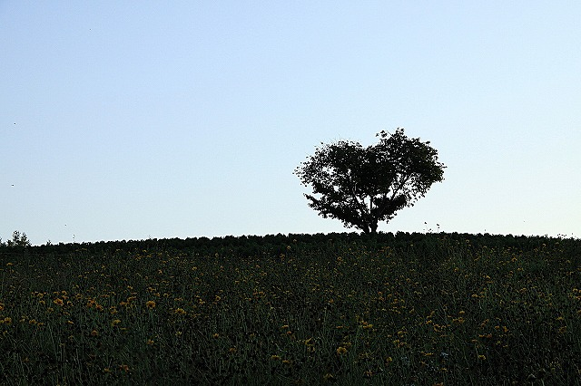 IMG_0442ハートの木