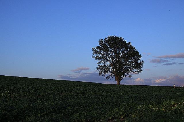 IMG_0458哲学の木