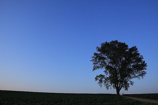 IMG_0481哲学の木
