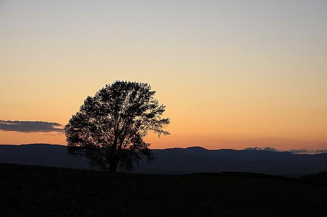 IMG_0508哲学の木