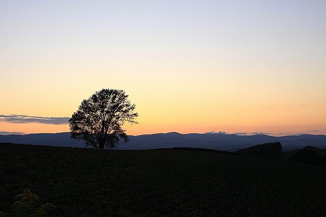 IMG_0511哲学の木