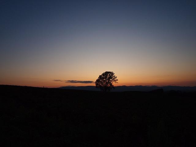 131哲学の木