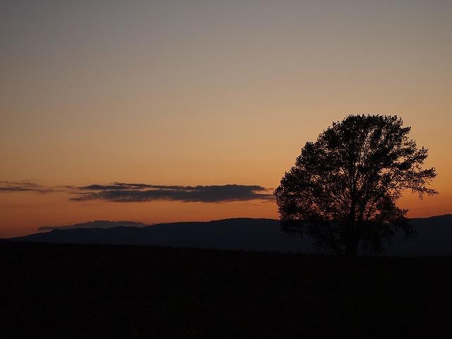 132哲学の木