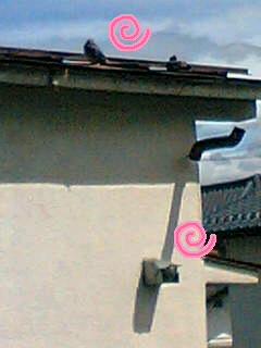 20080421-2.jpg