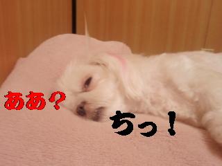 P6305033.jpg