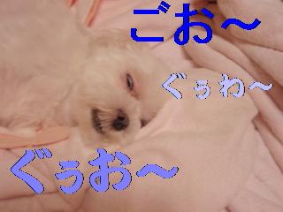 P7065069.jpg
