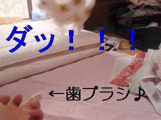 P8232000.jpg