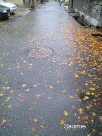 雨ともみじ2