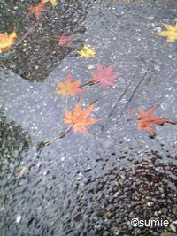 雨ともみじ3