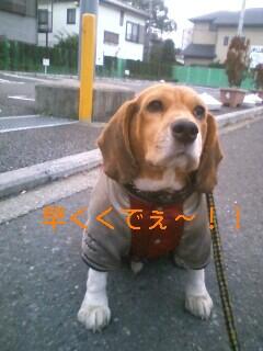 20081102064224.jpg