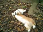 落ち葉でごろごろフェスタ、よ…汚れる~(TT