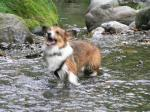 水に飛びつくフェスタ、…ブレまくりはご愛嬌(泣