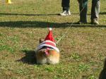 リンちゃんのプリチーなお尻、サンタさんの格好です。