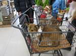 Jマート内は愛犬をカートに乗せて買い物出来ます。