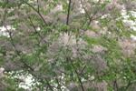 ハウスクリーニング道中の花3
