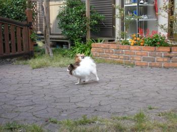 庭で遊ぶ犬