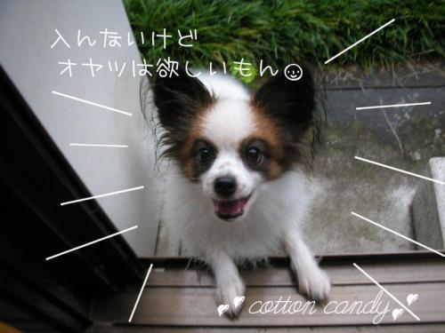 200810085.jpg