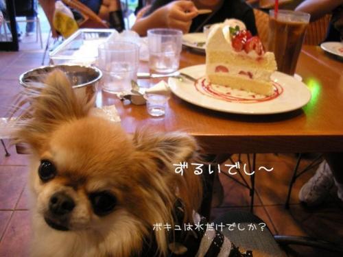 20081013ケーキ&アム